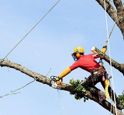 Waldschrat Forst - Baumsicherung